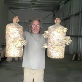 Hugh holding Commercial Size Oyster Mushroom Grow Kits